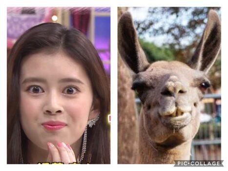 【爆笑画像】リマ(NiziU)がラマに似てる?比較して検証!